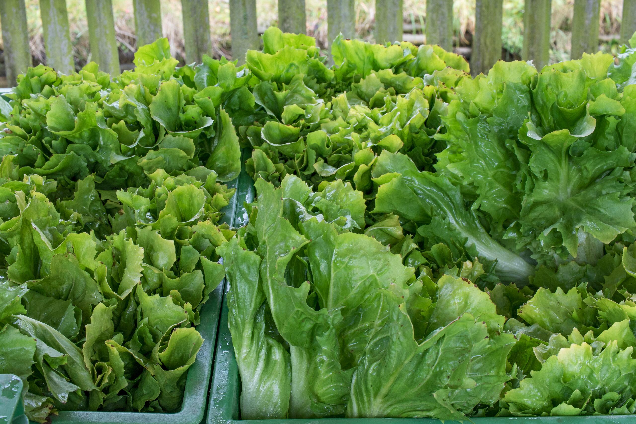 Bauernmarkt-Isen-Markttag-Salat